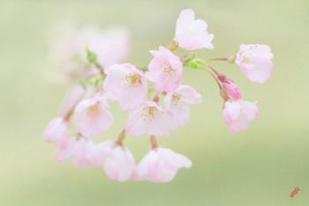 春の足音.jpg