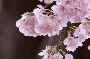 春色.jpg