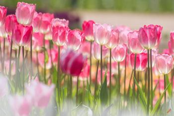 春近し.jpg