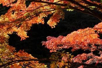 秋の暮れ.jpg