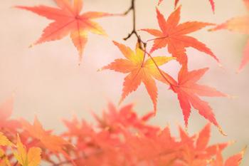 秋の装い.jpg