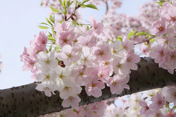 綵花.jpg