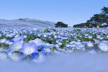 青い丘.jpg