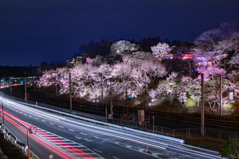 春の一コマ.jpg