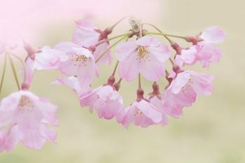 春の隣.jpg