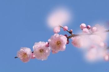 春立つ.jpg