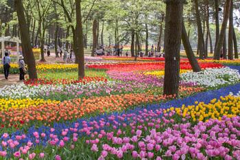 花の絨毯.jpg